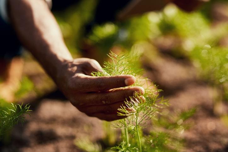 A gentle and nurturing hand